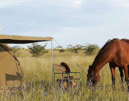 Riding Safaris gallery