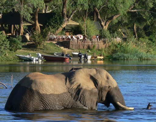 Chongwe River Camp gallery