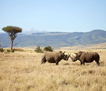 SPECIAL OFFERS in Kenya & Tanzania